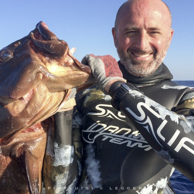 The great groupers of the Costa Smerald