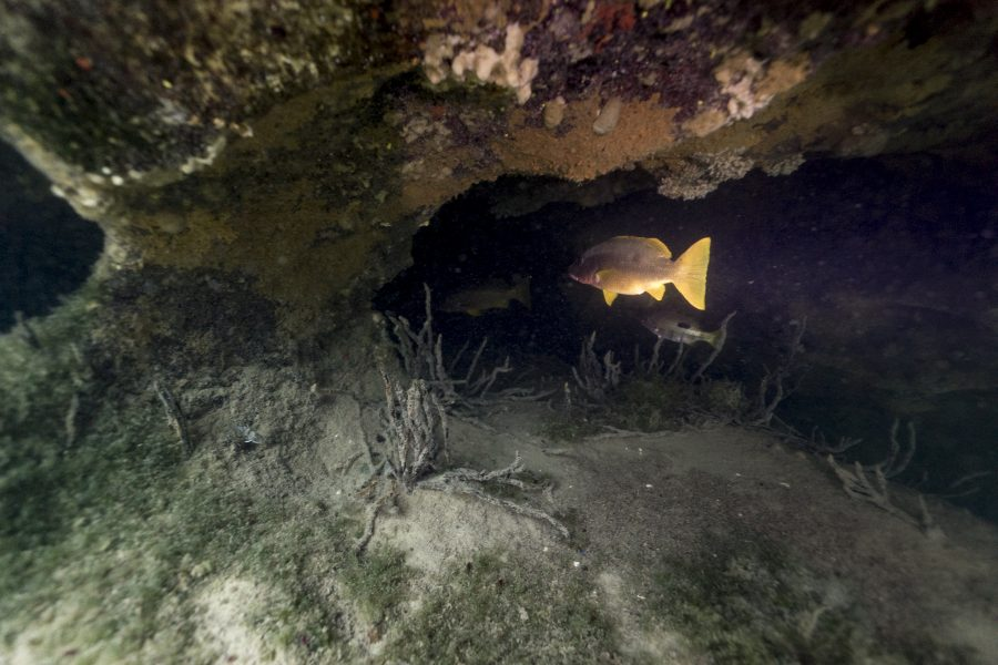 Discovering Cenote