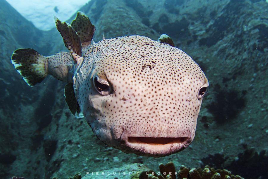 La Digue: un paradiso selvaggio ai confini dell'Oceano Pacifico
