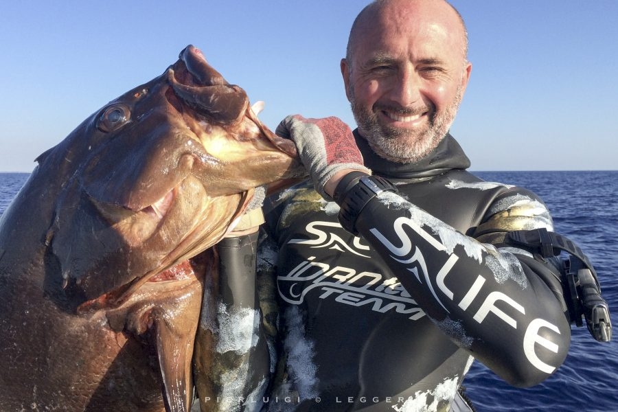 The great groupers of the Costa Smeralda